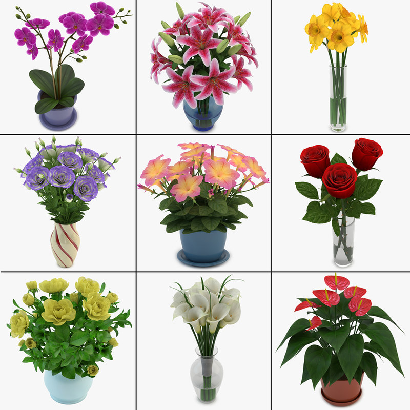 3d max bouquets flowers pot