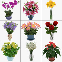 Bouquets and Flowers in Pot