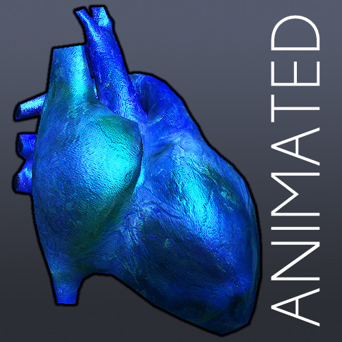 heart anatomy cycle animation 3d 3ds