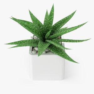 3d aloe vera plant model
