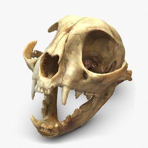 3d c skull scan model