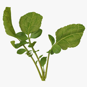 3ds radish leaves