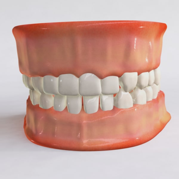human jaw tongue teeth 3d obj