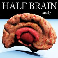 3d model of half brain