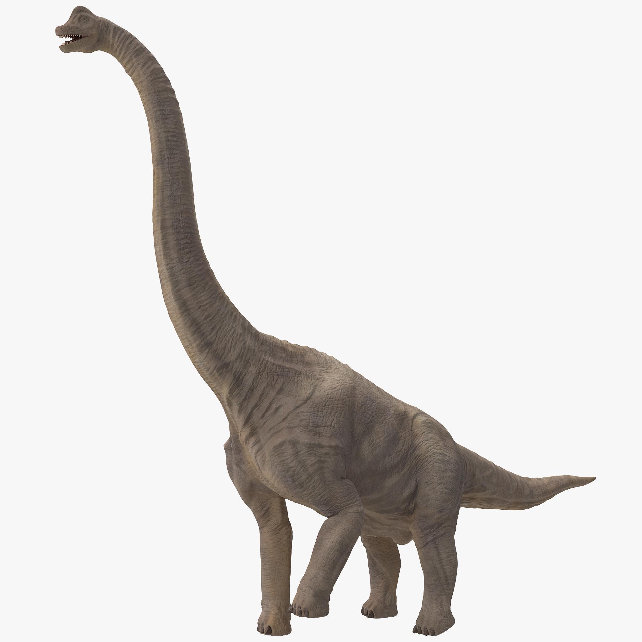 3d brachiosaurus rigged model