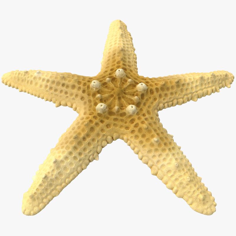 sea star 3d max