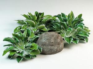 3d hosta plantain lilies model
