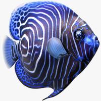 3d max emperor juvenile angelfish