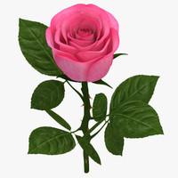 max rose branch pink