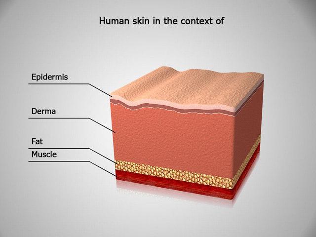 3d human skin context anatomy