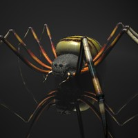rigged spider 3d max