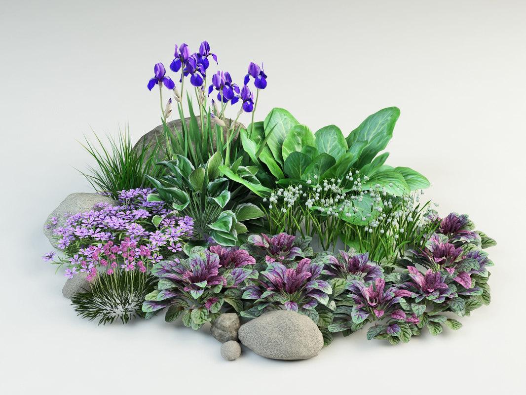 3d model composition plants ajuga