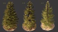 pine trees 3d model
