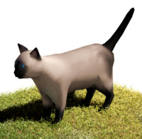 Cat Siamese
