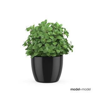 mint pots accessories 3d model