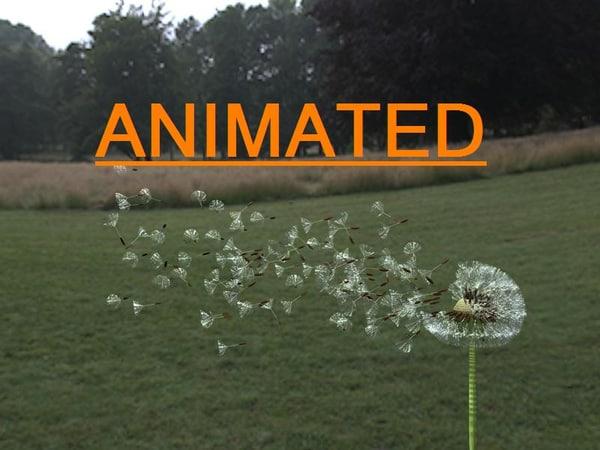 cinema4d dandelion seeds