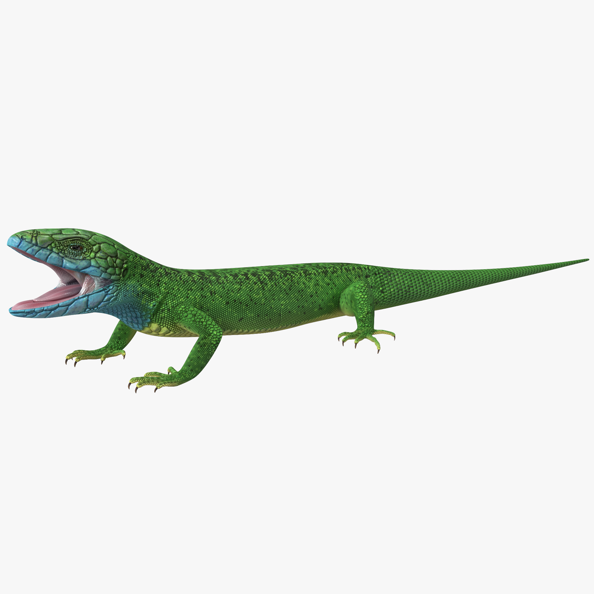 3d model european green lizard lacerta