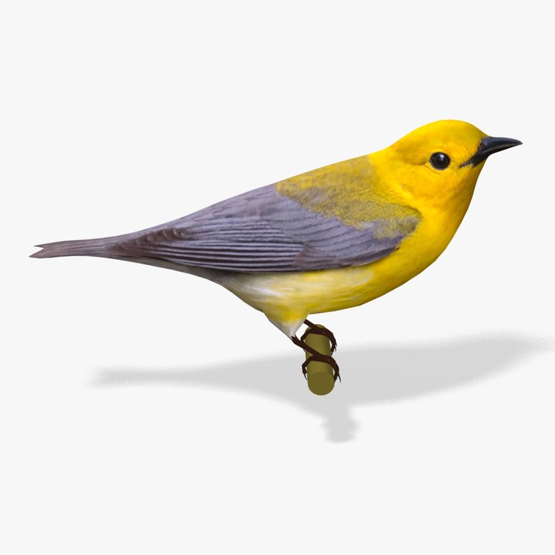 3ds prothonotary warbler ab