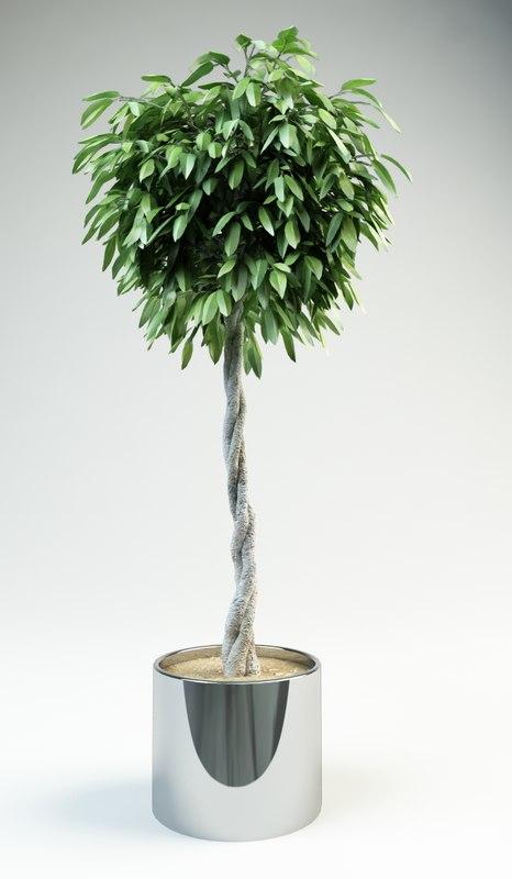 3d fig ficus tree