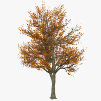 Autumn Tree Yellow Red Foliage deciduous