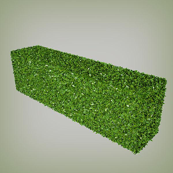 3d hedge multiscatter
