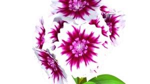 3d biennial flowering model