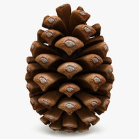 conifer cone 3d 3ds