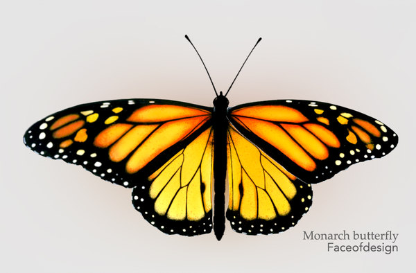 3d model monarch butterfly