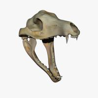 thylacine skull 3d 3ds