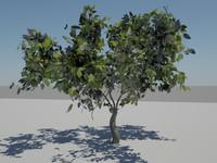 free summer tree 3d model