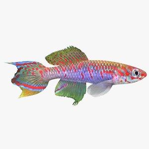 killifish fish 3ds
