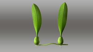 bulbophyllum 3d model