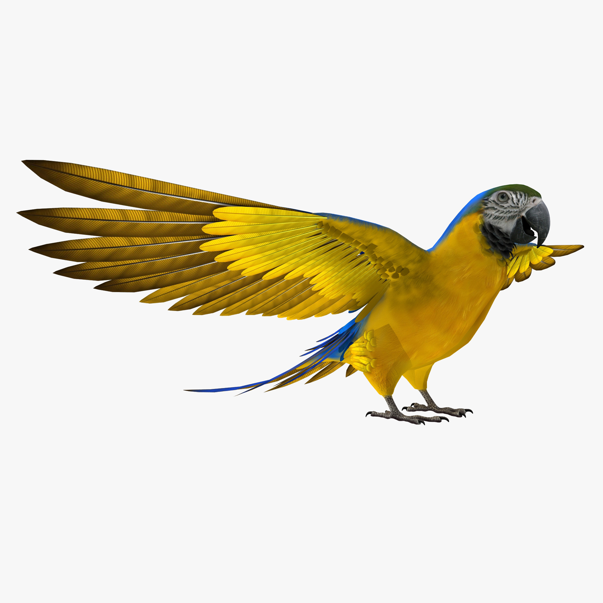 blue gold macaw 3d 3ds