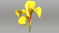 Canna indica_symmetry of flower