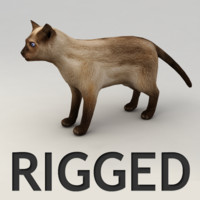 rigged siamese cat 3d model