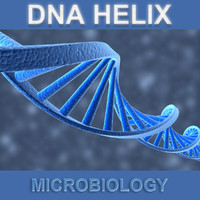 3d model dna helix