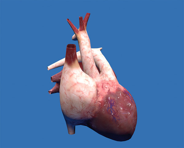 3d real heart