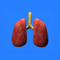 3ds max lungs human