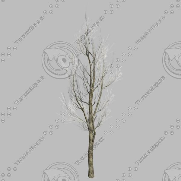 max autumn tree