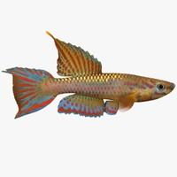 Killifish 1