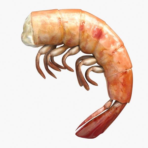 boiled shrimp 3ds