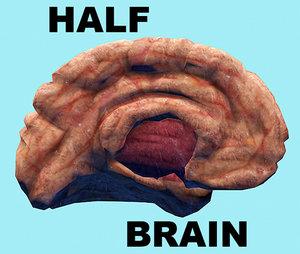 3d half brain