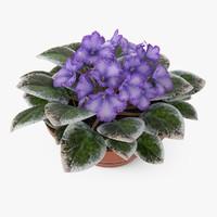 3d model violets plant