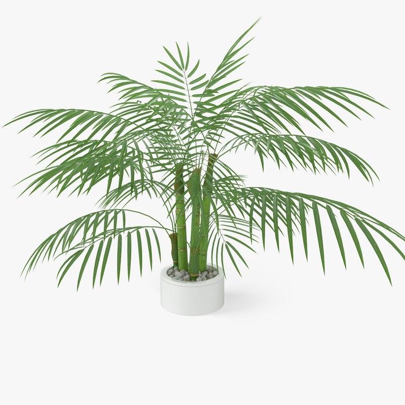 palm plant 3d c4d