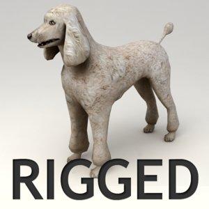 3d rigged poodle