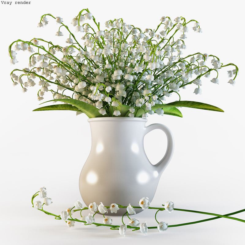 convallaria majalis flowers pitcher 3d model
