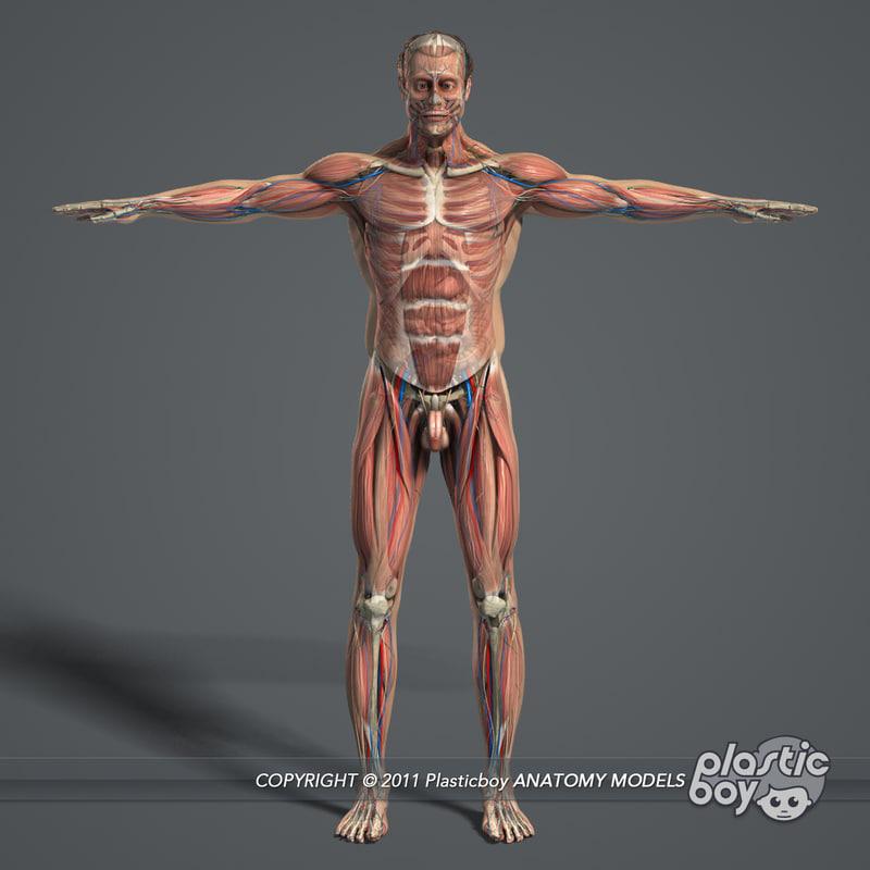 MAYA RIGGED Complete Male Anatomy PACK
