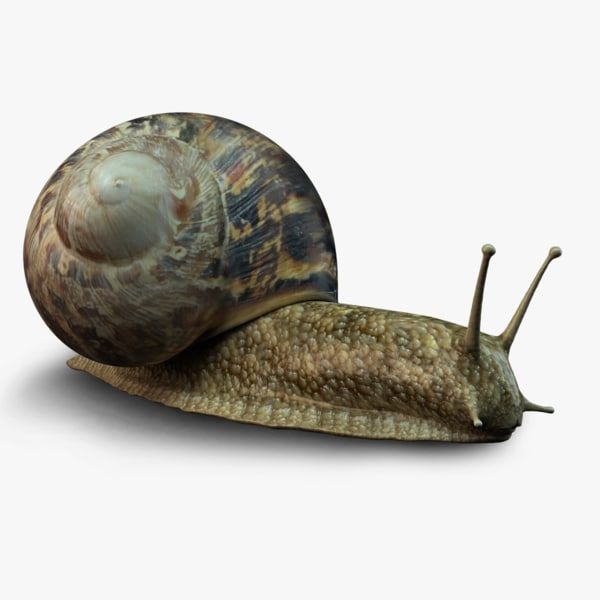 photo-realistic snail 3d ma