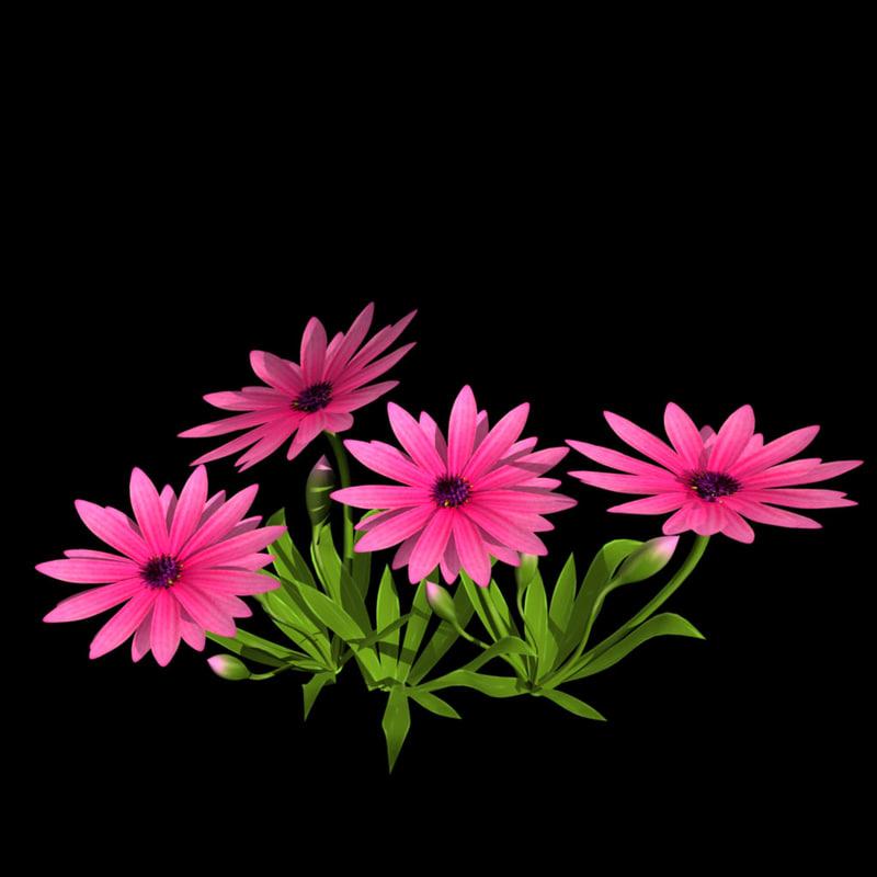 3d model pink flower