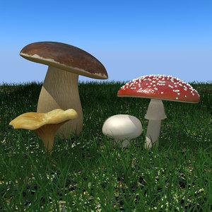 mushrooms agaricus bisporus max